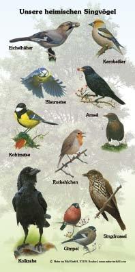 Unsere heimischen Singvögel