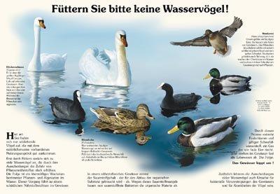 Füttern Sie bitte keine Wasservögel
