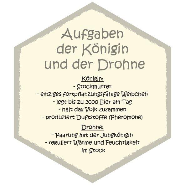 Wabe Aufgaben Königin und Drohne