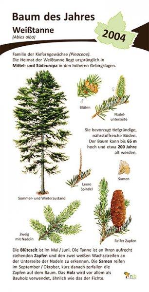 Weißtanne - Baum des Jahres 2004