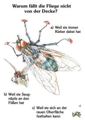 Warum fällt die Fliege nicht von der Decke?