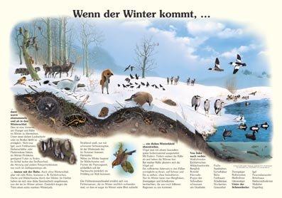 Wenn der Winter kommt