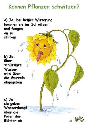 Können Pflanzen schwitzen?