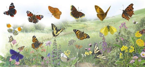 Magnettafel Schmetterlinge