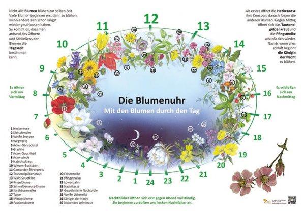 Die Blumenuhr