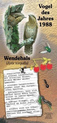 1988 Wendehals