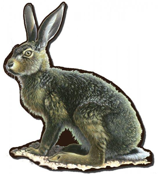 Tiersilhouette - Hase