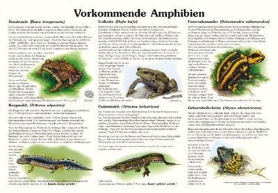 Vokommende Amphibien