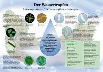 Der Wassertropfen