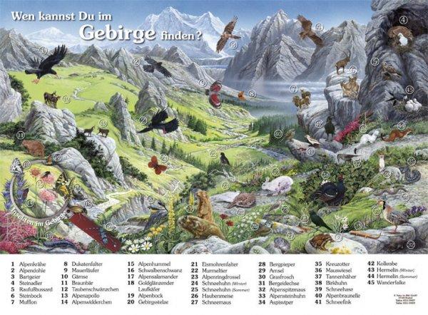 Wen kannst Du im Gebirge finden?