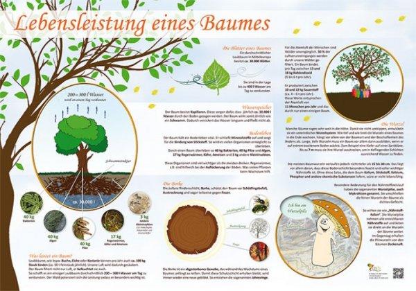 Lebensleistung eines Baumes