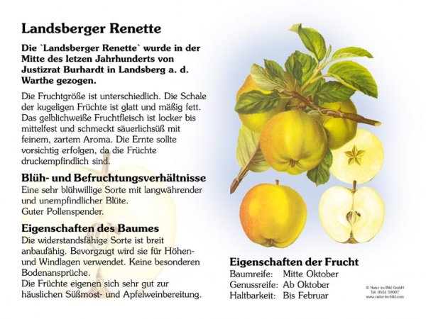 Landsberger Renette