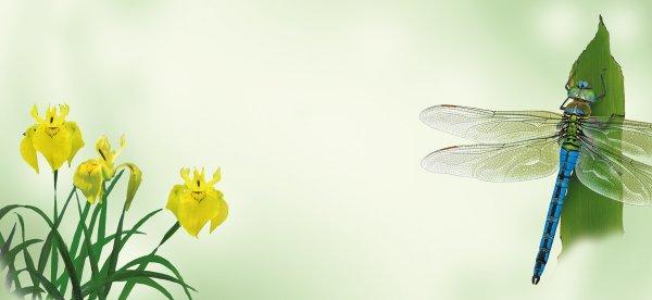 Magnettafel Libelle
