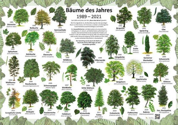 Bäume des Jahres 1989-2021