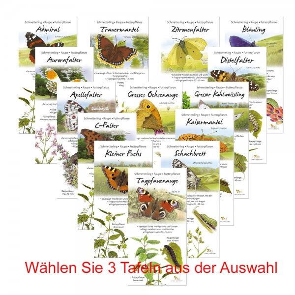 Paket Schmetterlinge