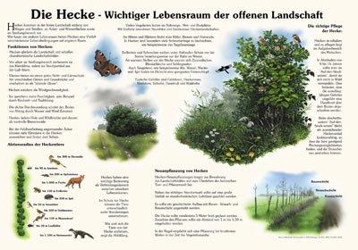 Die Hecke - Wichtiger Lebensraum der offenen Landschaft