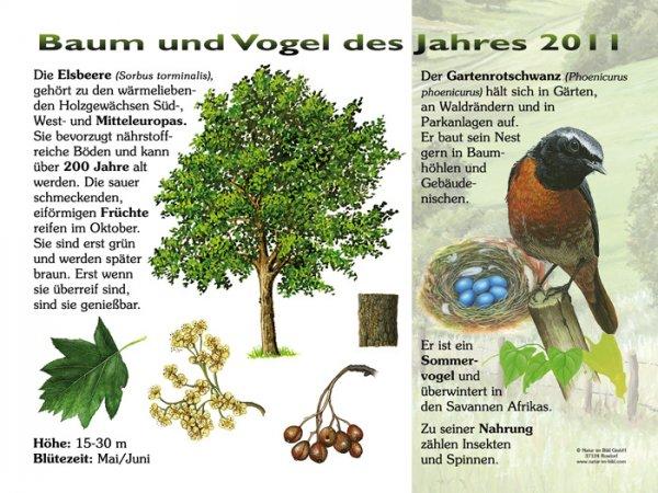 Baum und Vogel des Jahres 2011