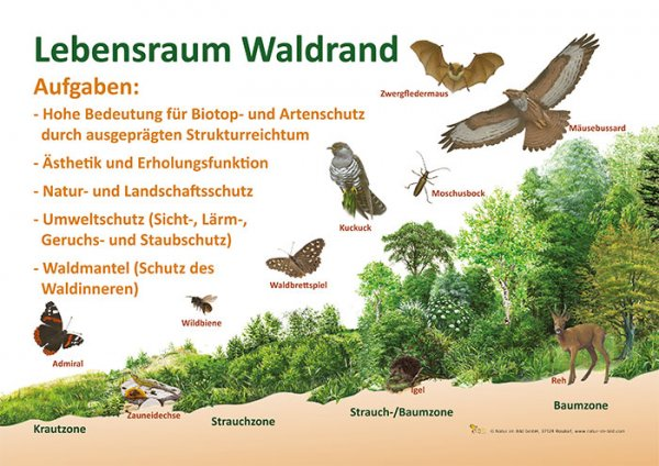 Lebensraum Waldrand