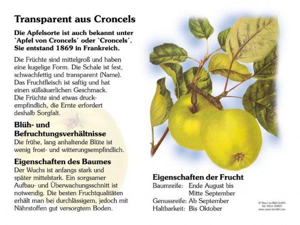 Croncels