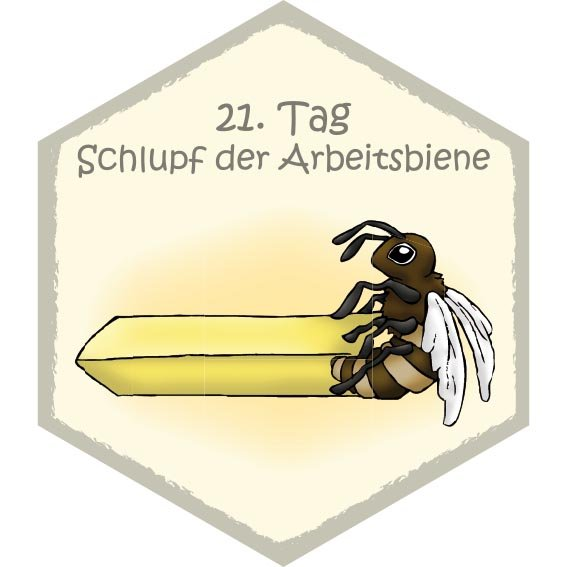 Wabe Schlupf
