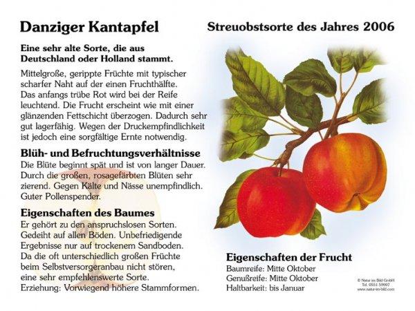 Danziger Kantapfel