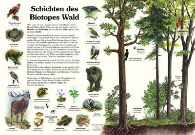 Schichten des Biotopes Wald