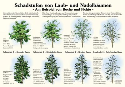 Schadstufen von Laub- und Nadelbäumen