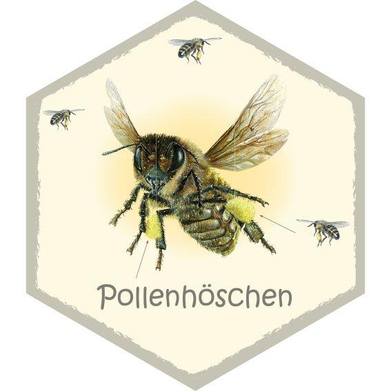 Wabe Pollenhöschen
