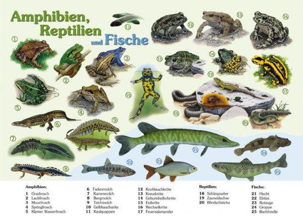 Amphibien, Reptilien und Fische