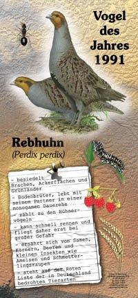 1991 Rebhuhn