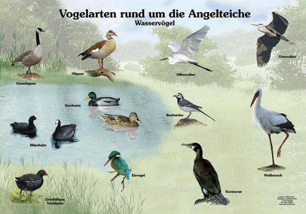 Vogelarten rund um die Angelteiche
