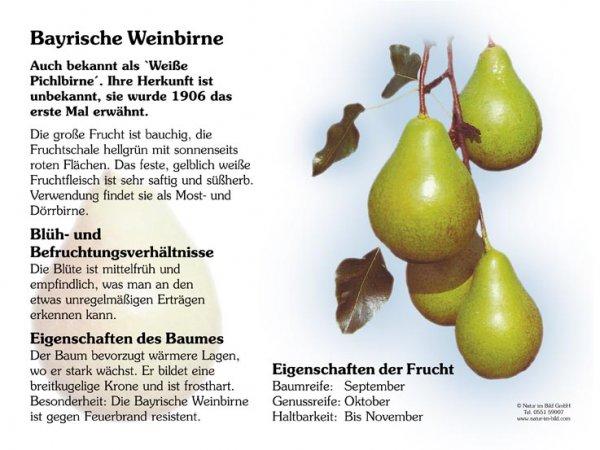 Bayrische Weinbirne