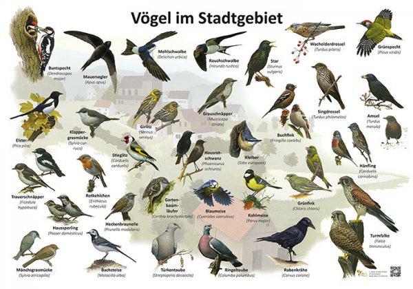 Vögel im Stadtgebiet