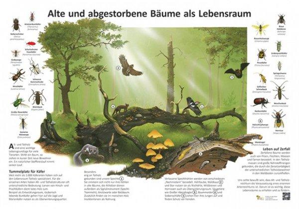 Alte und abgestorbene Bäume als Lebensraum