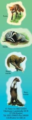 Fuchs, Dachs, Baummarder, Steinmarder