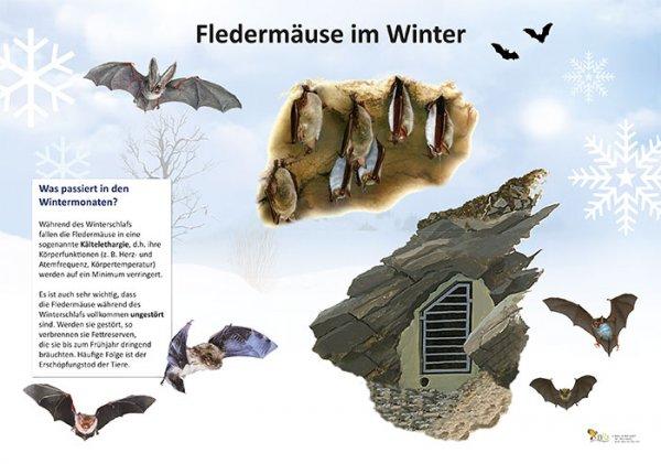 Fledermäuse im Winter