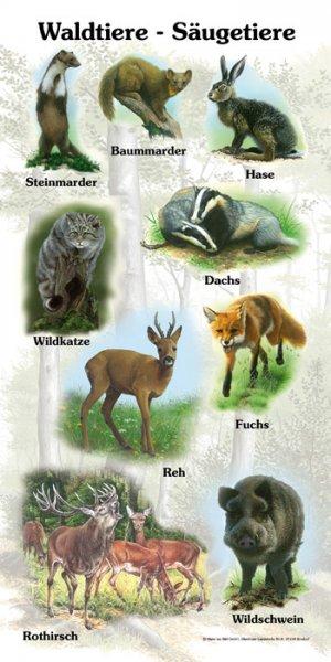 Waldtiere-Säugetiere