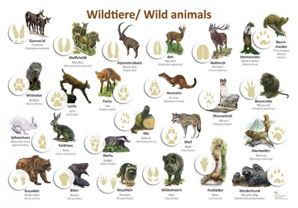 Wildtiere/ Wild animals
