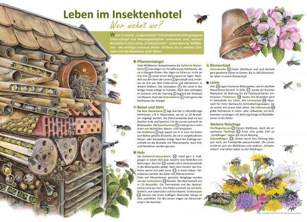 Leben im Insektenhotel - Wer wohnt wo?