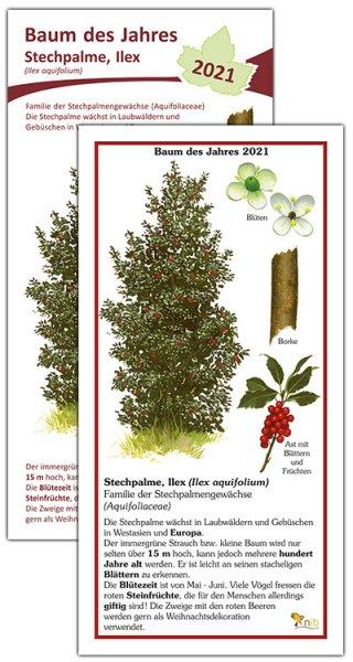 Stechpalme, Ilex Baum des Jahres 2021