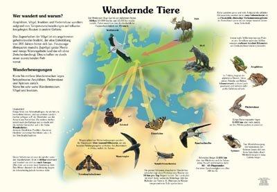 Wandernde Tiere