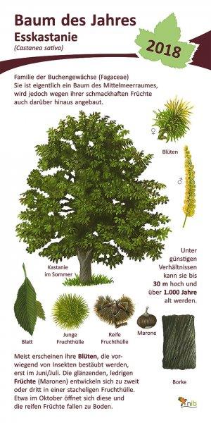 Edelkastanie - Baum des Jahres 2018