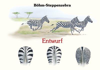 Böhm-Steppenzebra