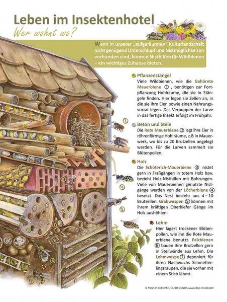 Leben im Insektenhotel