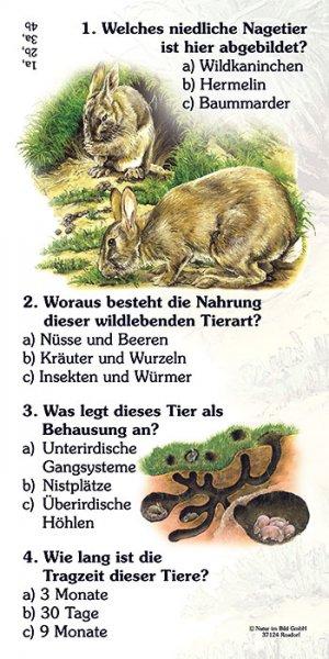 Wildkaninchen - Quiz