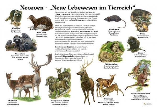 Neozoen - Neue Lebewesen im Tierreich