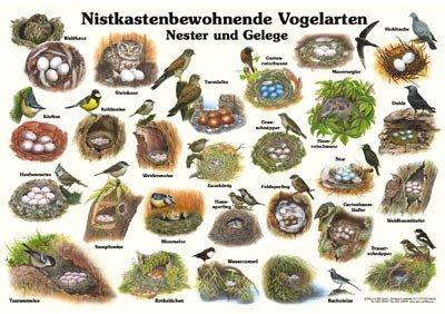 Nistkastenbewohnende Vogelarten