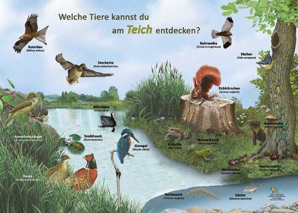 Welche Tiere kannst du am Teich entdecken?