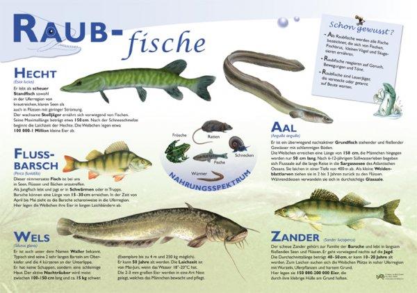 Raubfische