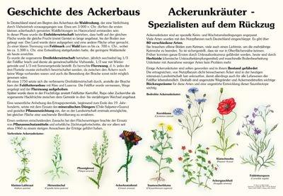 Ackerunkräuter und Geschichte des Ackerbaus